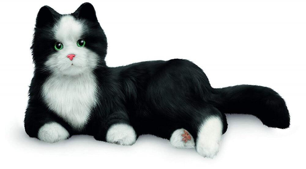 Companion Pet Black & White Tuxedo Cat
