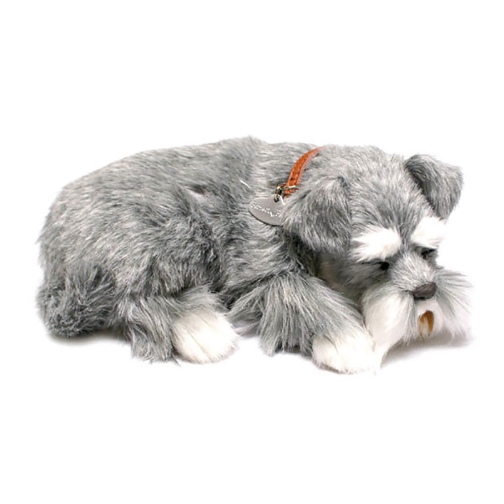 Schnauzer Puppy by Perfect Petzzz