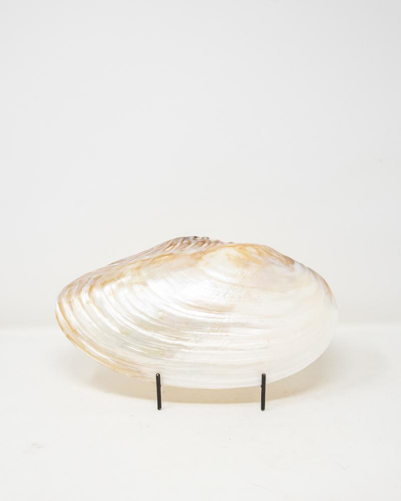 shells, luxury accessories, aura london