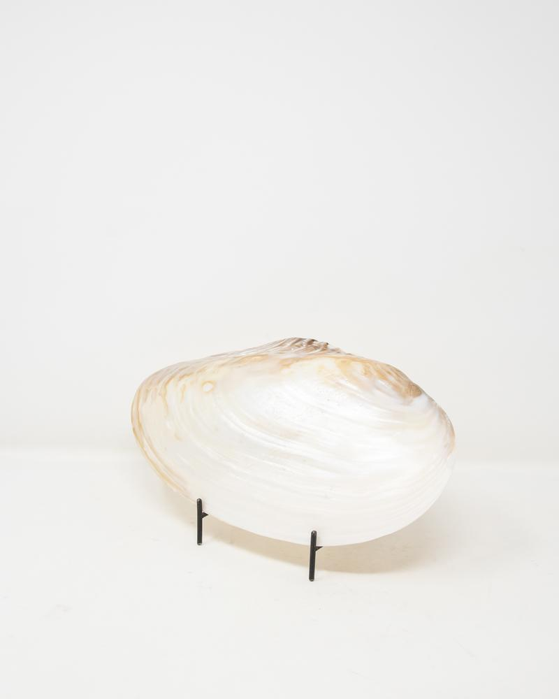 shell, decor, nautical, aura london, luxury accessories