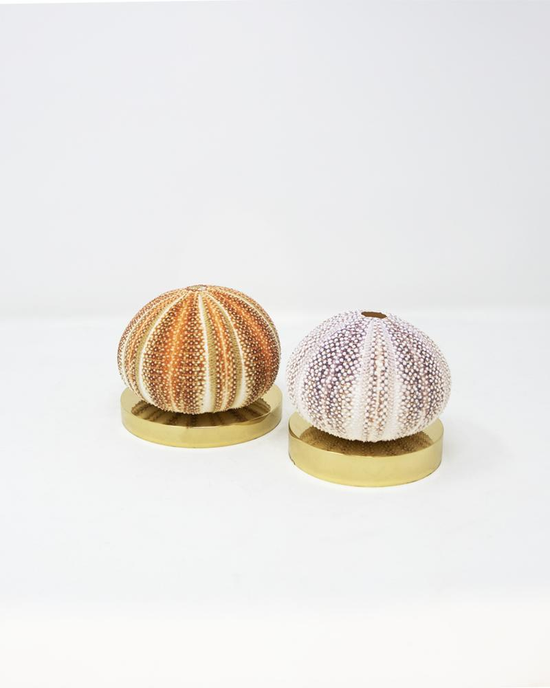 shell, star fish, aura london, luxury accessories