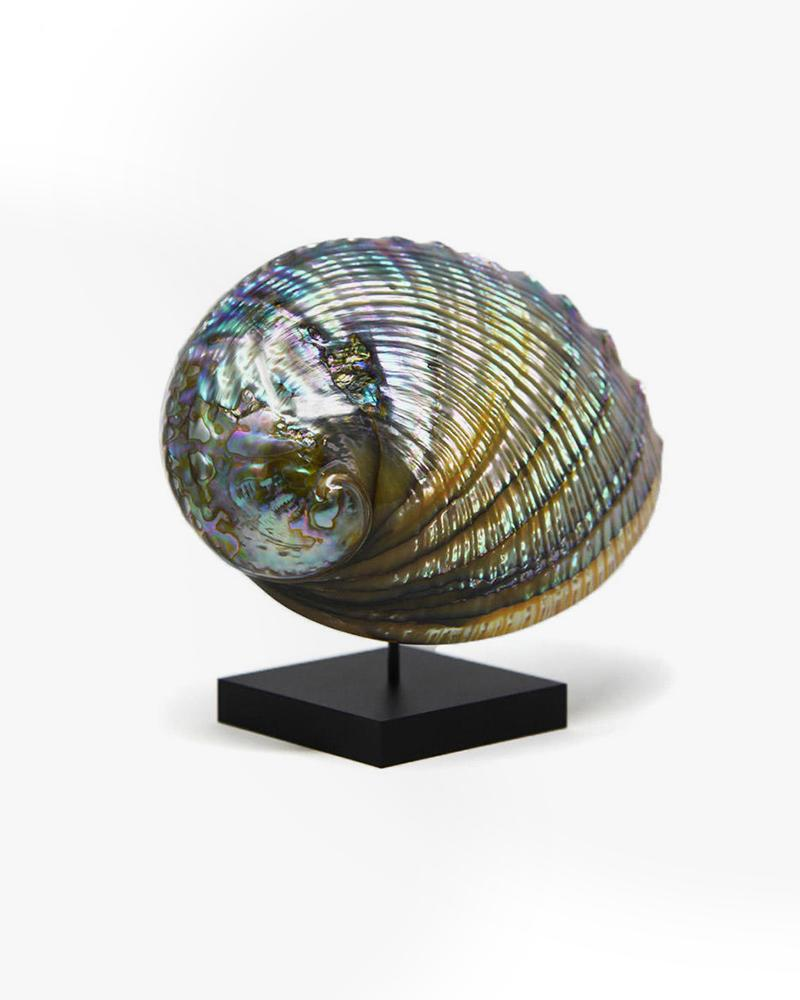 shell, pearlescent, decor, luxury accessories