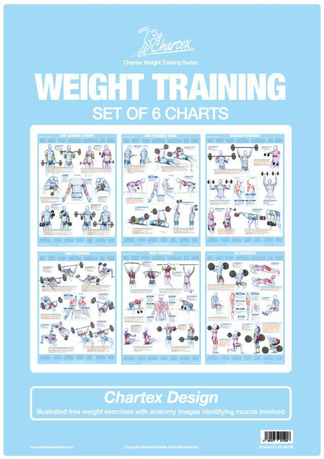 Weight Training Bodybuilding Exercises Set Of 6 Charts