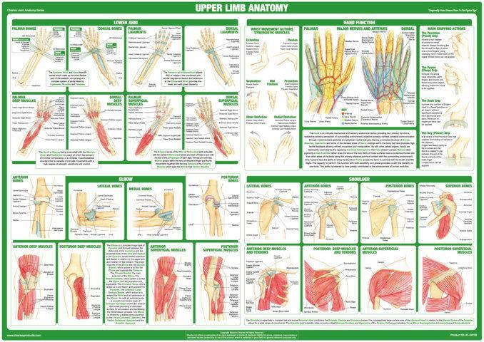 Lower Body and Spine Joint Anatomy Chart