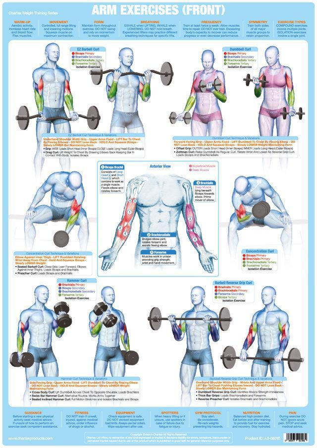 Arm Weight Training Bodybuilding Exercise Chart