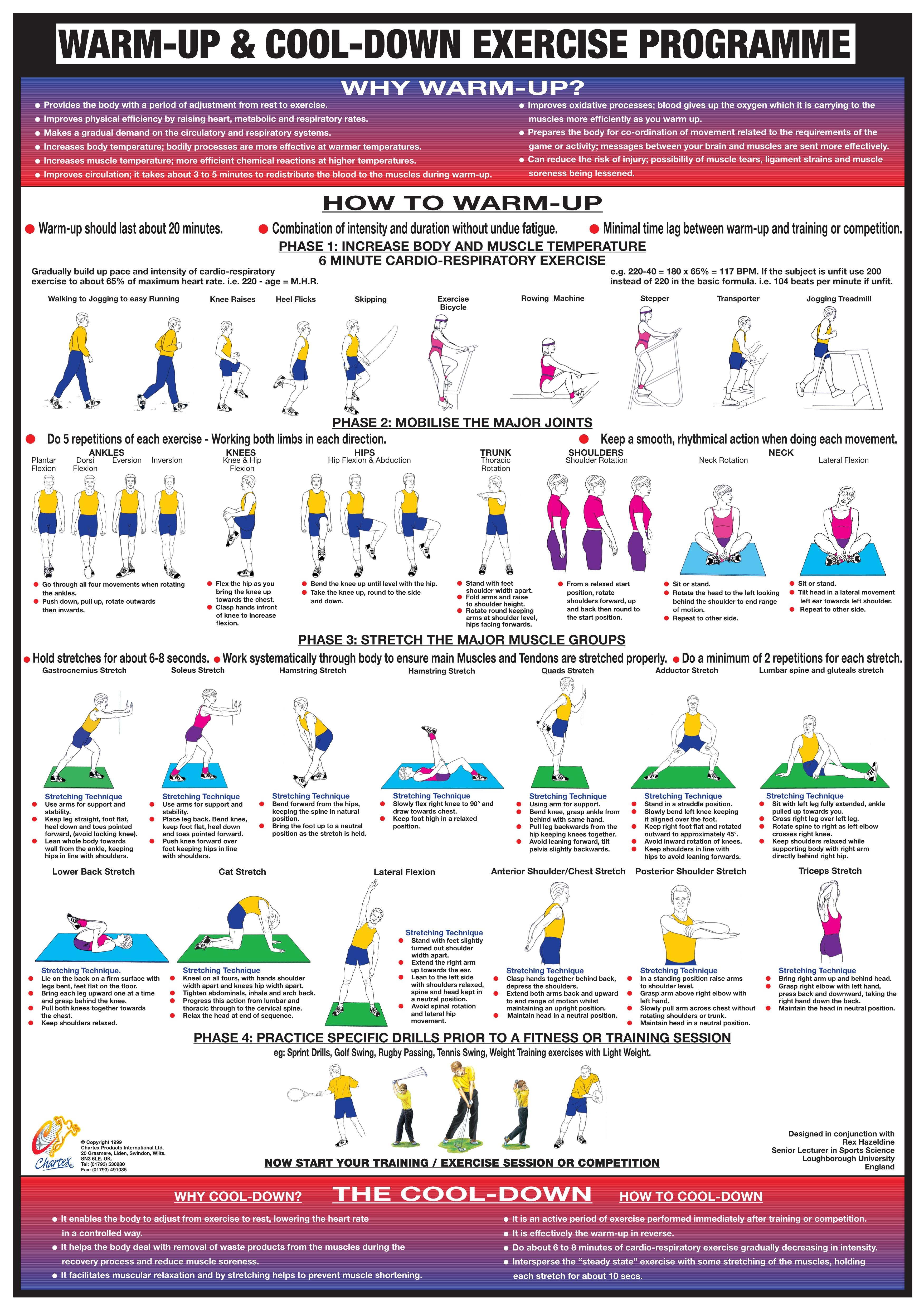 warm up cool down exercise chart