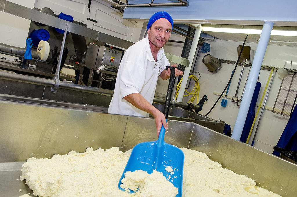 Champion Cheese Maker: FACT!