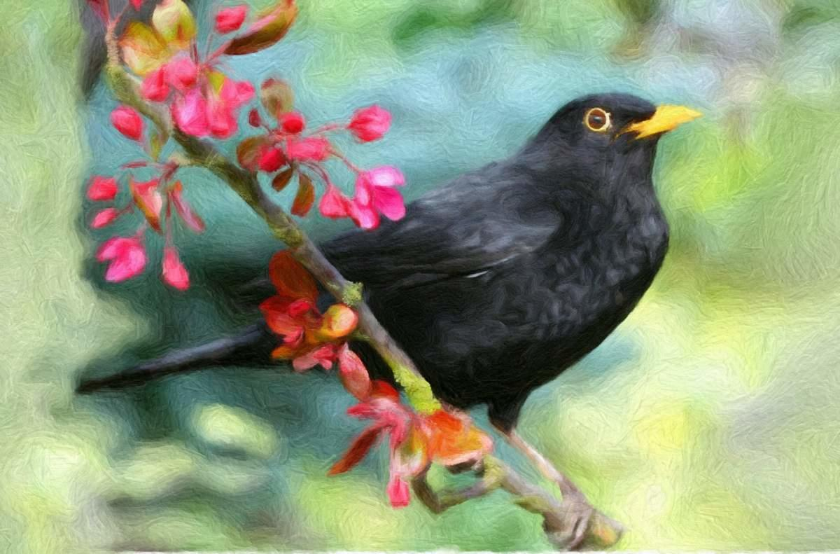 original A3 blackbird painting used on house sign