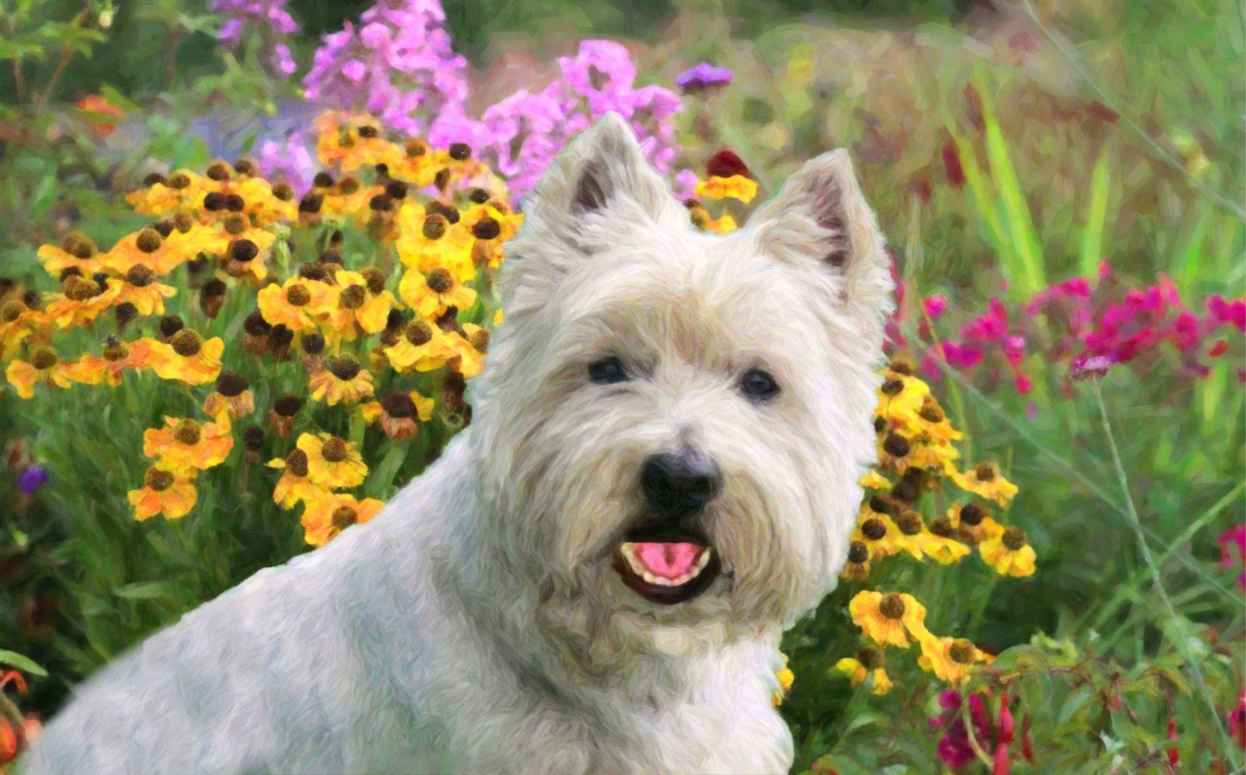 West Highland Terrier painting for house signs