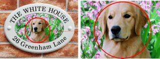 zoom in image of golden retriever dog printed on ceramic style house sign