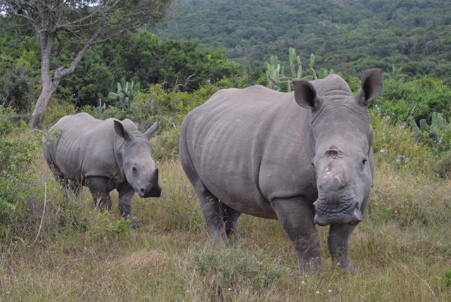 We are proud to support Rhino Tears Jewellery, aiding anti poaching projects across Africa