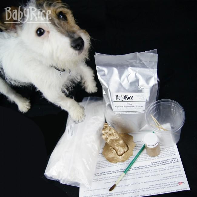 Dog with contents of BabyRice Paw Casting Kit and finished paw cast