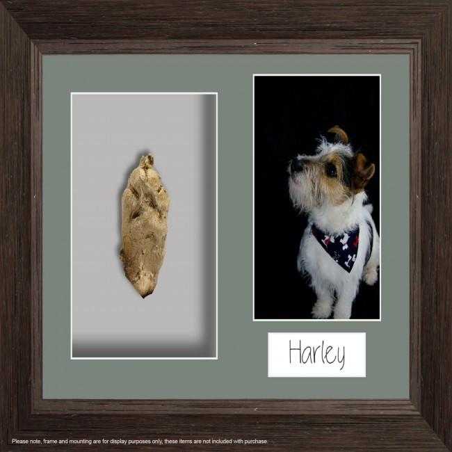 Framed paw cast from BabyRice