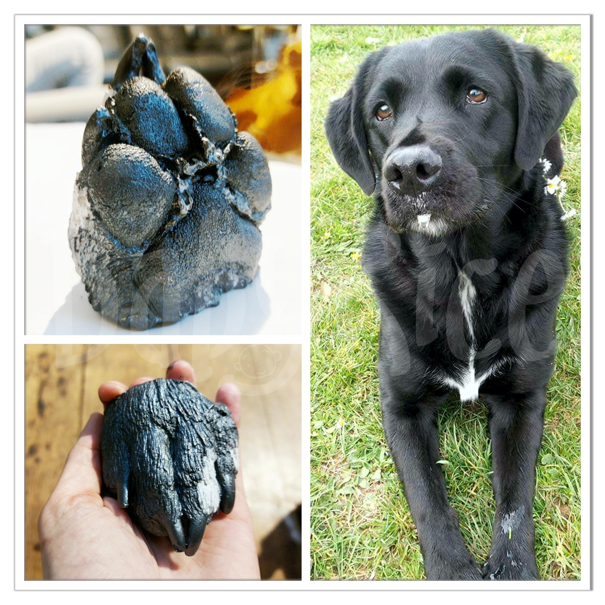 Dog Paw Casting Kit
