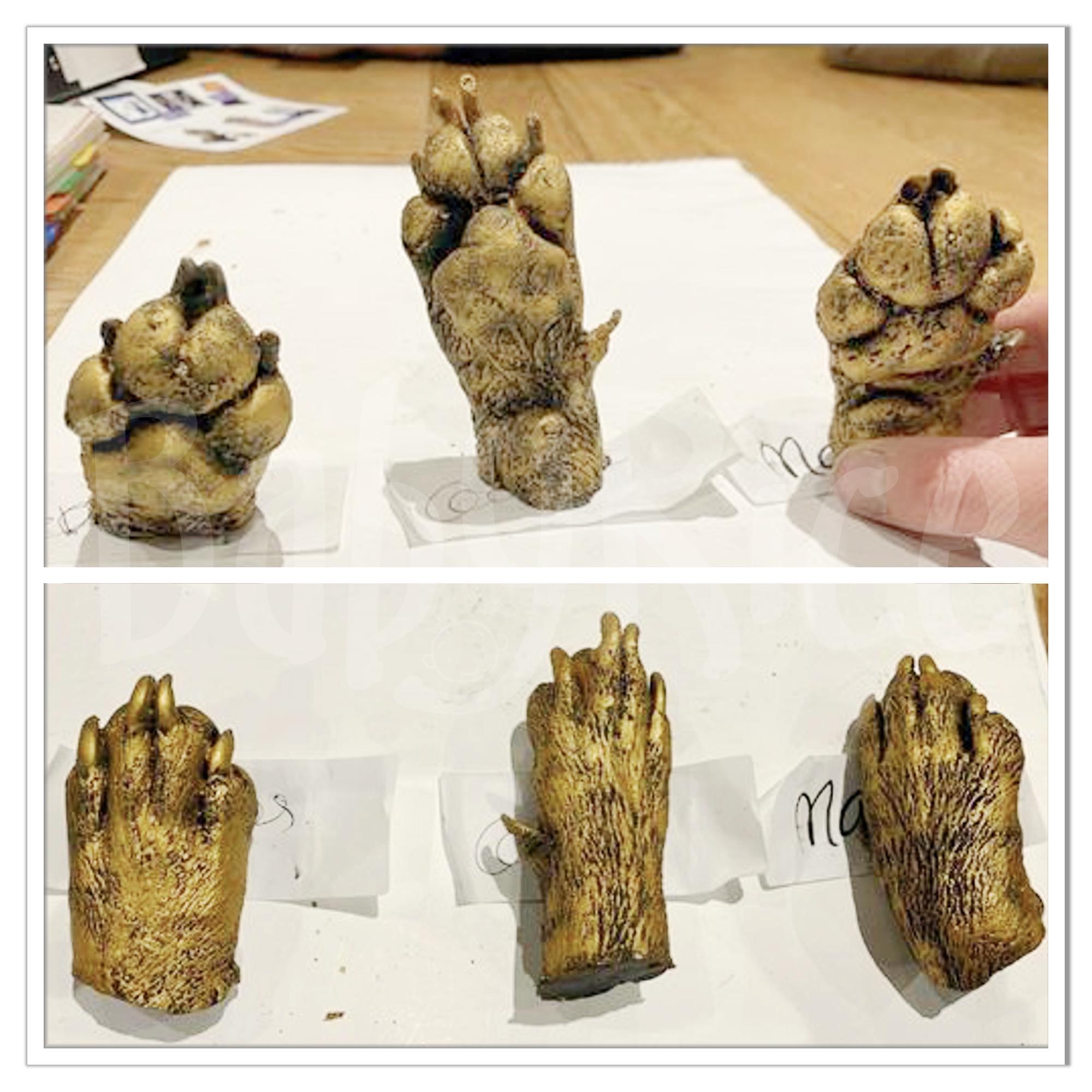 Dog Paw Cast