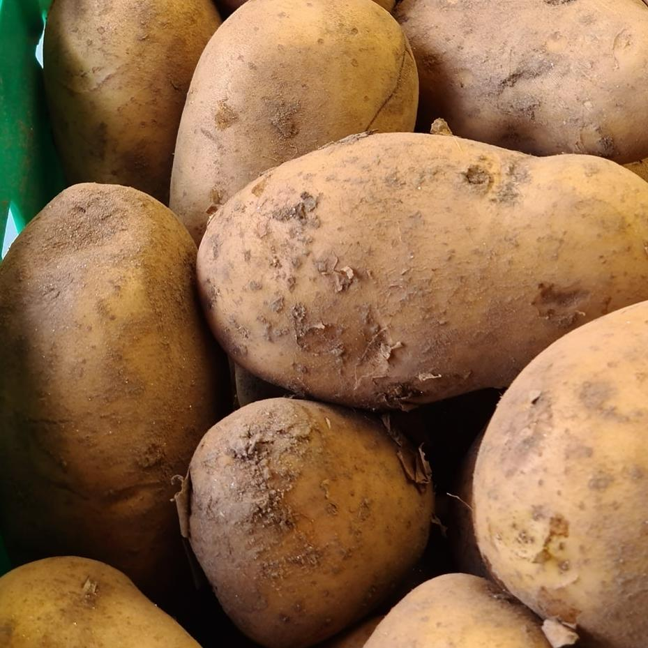 Close up of dirty potatoes