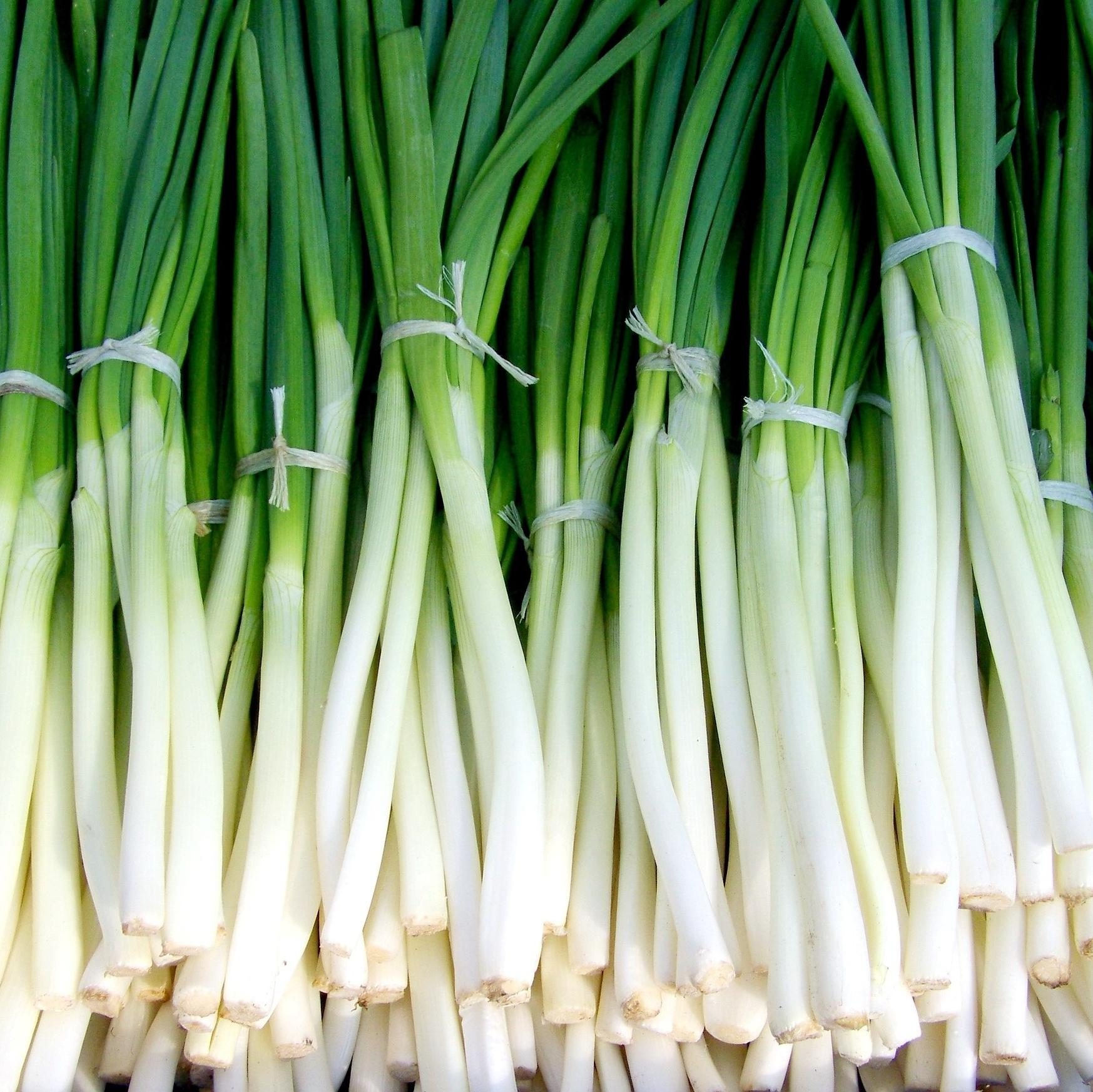 One bunch of Spring Onions
