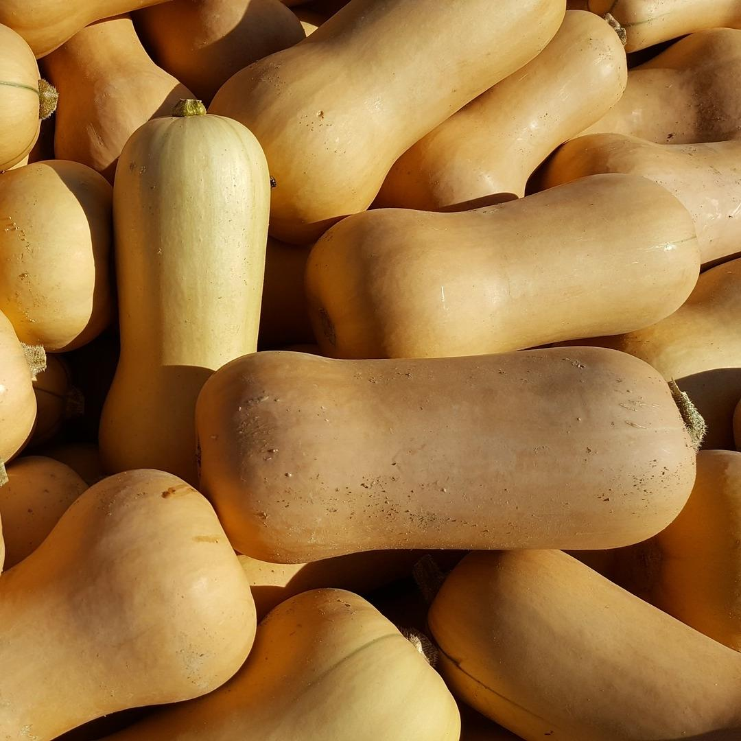 One butternut squash