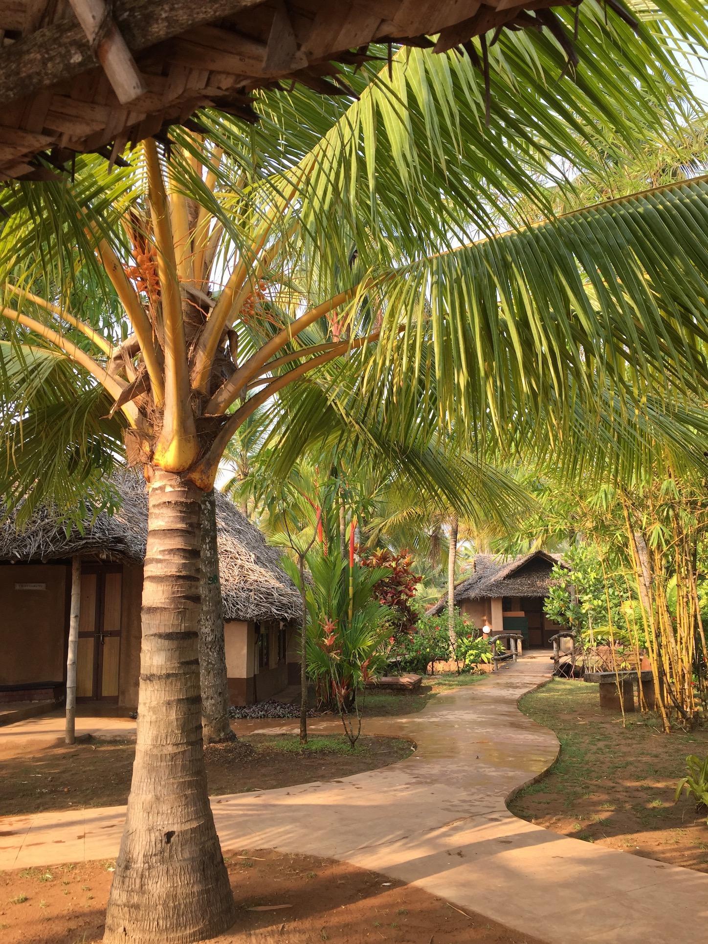 cherai, beach, accommodation, villa, palm, retreat, yoga, holidaykerala